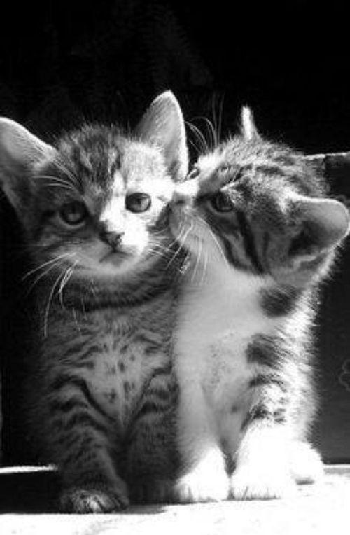 ..Love U, buddy...